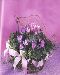 African Violets in a basket - Designs East Florist Dallas