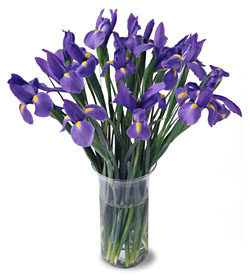 20 Blooming Iris - Designs East Florist Dallas