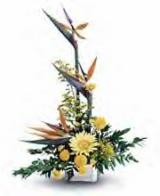 Exotic Flowers -  Designs East Florist Dallas