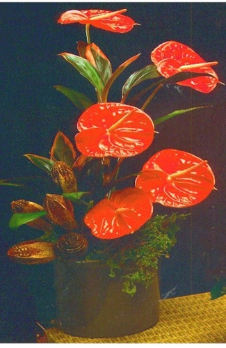 Exotic Anthurium Flowers - Designs East Florist Dallas