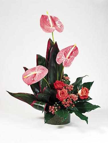 Exotic Anthurium Tropical Flowers - Designs East Florist Dallas
