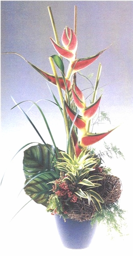 Exotic Heliconia Tropical Flowers - Designs East Florist Dallas