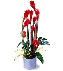 Harmony Tropical Arrangement - Designs East Florist Dallas
