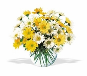 Dashing Daisies - Designs East Florist Dallas