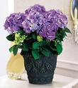 Blue Hydrangea - Designs East Florist Dallas