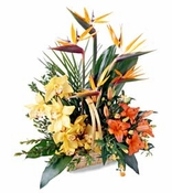 Glimpse Of Nature™ Basket - Designs East Florist Dallas