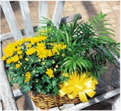 Blooming Plant and Palm Plant  - Designs East Florist Dallas
