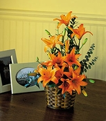 Asiatic Lilies - Designs East Florist Dallas