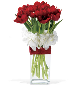 Graceful Tulips - Designs East Florist Dallas