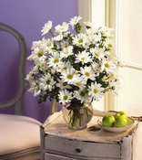 Daisies - Designs East Florist Dallas