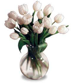15 White Tulips Bouquet - Designs East Florist Dallas