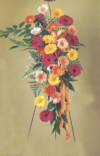Funeral  Spray Mixed Gerbera Daisies