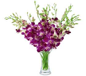 Purple Dendrobium Orchid - 10 Stem