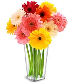 Bouquet of 20 Gerbera Daisies - Designs East Florist Dallas