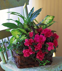 Garden Plant Basket - Designs East Florist Dallas