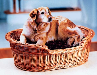 Wicker Pet Baskets