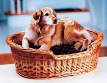 Wicker Pet Basket - Medium (UPS $38)