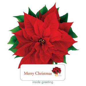 Paper House Poinsettia Card