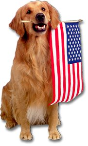 Golden Retriever & US Flag Magnet