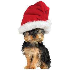Holiday Silky Terrier Magnet