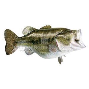 Large Mouth Bass Magnet