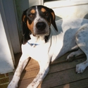 buy discount  Eric's Dog Charlie (Hound Mix)