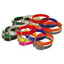 buy discount  Beagle 3/4 in. Field Trial Dog Collar Combo Pack