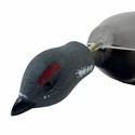 buy discount  Spruce Grouse Head Detail