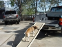 buy discount  PetSTEP Attached to Tailgate