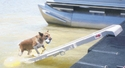 buy discount  PetSTEP at the Dock