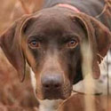 buy discount  Why Shop with Gun Dog Supply?