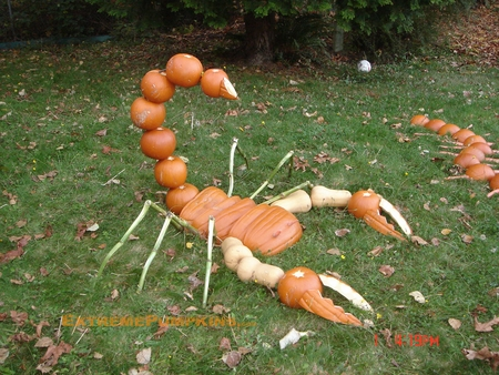 The Giant Scorpion Pumpkin