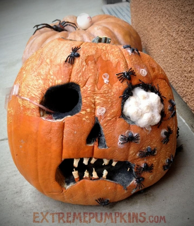 The Moldy Spiders Pumpkin