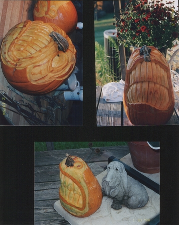 The Pumpkin Bumpkin's Best