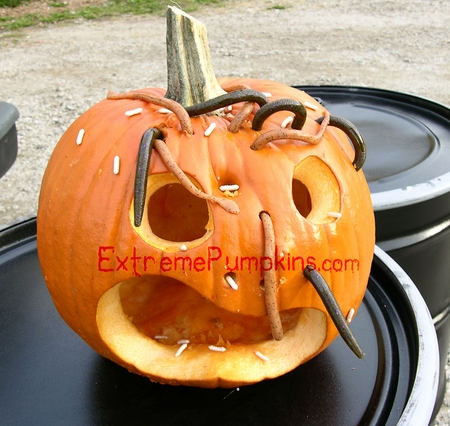 Worm Infested Pumpkin - Take 2