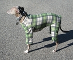 Italian Greyhound Grass Green Plaid Indoor/Outdoor Bodysuit