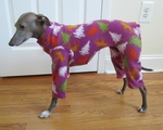 Italian Greyhound Plum Trees Holiday Indoor/Outdoor Bodysuit