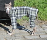 Italian Greyhound Black/Cream Plaid Indoor/Outdoor Bodysuit