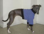 Italian Greyhound French Blue Nantucket Fleece Sweater