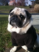 Pug, Boston Terrier & French Bulldog Heavy Fleece Sweaters