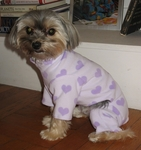 Toy and Teacup Purple Hearts Jammies