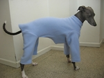 Italian Greyhound Baby Blue Jammie
