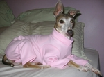 Italian Greyhound Soft Pink Jammie