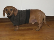 Dachshund Heathered Coffee Tweed Fleece Sweater