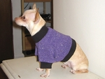 Toy Violet Fleeced Sweater