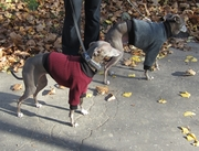 Italian Greyhound Heavy Fleece Sweaters