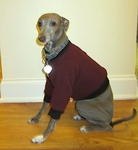 Italian Greyhound Beet Poorboy Fleece Sweater