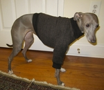 Italian Greyhound Coffee Tweed Fleece Sweater