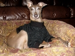 Italian Greyhound Black Nantucket Fleece Sweater