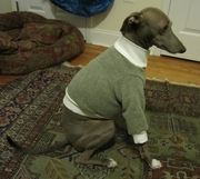 Italian Greyhound Heathered Olive Tweed Fleece Sweater